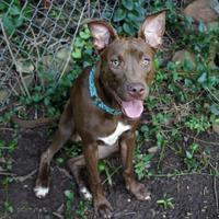 Adopt A Pet :: Edith [MD] - Oklahoma City, OK