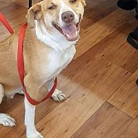 Adopt A Pet :: Diamond - Savannah, GA