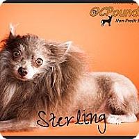 Adopt A Pet :: Sterling - Orange, CA