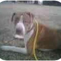 Adopt A Pet :: Cooper - Emory, TX