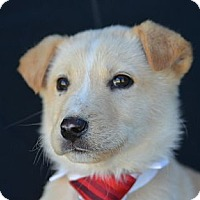 Adopt A Pet :: Fred Astaire - Plano, TX