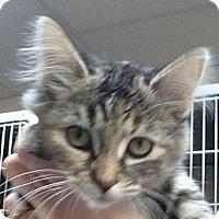 Adopt A Pet :: Juicy Lucy - St. Petersburg, FL