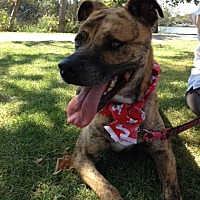 Adopt A Pet :: Archie - Midway City, CA