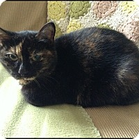 Adopt A Pet :: Chichi - london, ON