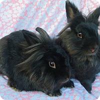 Adopt A Pet :: Bink - Los Angeles, CA