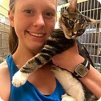 Adopt A Pet :: Trooper - McDonough, GA
