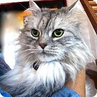 Adopt A Pet :: Willie - Davis, CA