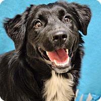 Adopt A Pet :: Haley Dunphy - Jersey City, NJ