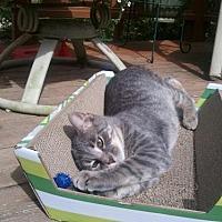 Adopt A Pet :: Quinn - Kohler, WI