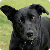 Adopt A Pet :: Lacey - Westfield, NY