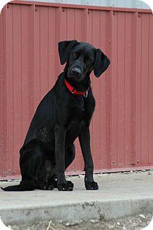 Retriever (Unknown Type) Mix Dog for adoption in Buffalo, Wyoming - Jett