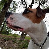 Adopt A Pet :: Ozzy - Garden City, MI