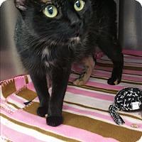 Adopt A Pet :: Aspen - Chippewa Falls, WI