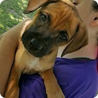 Adopt A Pet :: VANNA-ADOPTED - East Windsor, CT