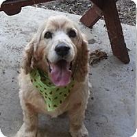 Adopt A Pet :: Max & JJ--A pair - Toluca Lake, CA
