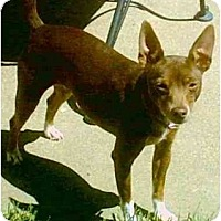 Adopt A Pet :: Coco - Concord, CA