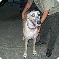 Adopt A Pet :: Rainy - West Bloomfield, MI