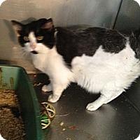 Adopt A Pet :: Xander - Wenatchee, WA