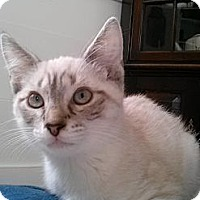 Adopt A Pet :: Sirius - Arlington, VA