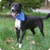 Adopt A Pet :: T.J. - Mocksville, NC