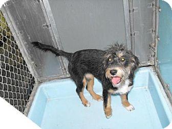 Terrier (Unknown Type, Medium) Dog for adoption in Napoleon, Ohio - Mandy