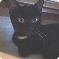 Adopt A Pet :: Kaley - Cocoa, FL