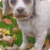 Adopt A Pet :: Sassy Frass - Davison, MI