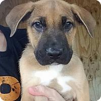 Adopt A Pet :: Petrie - Gainesville, FL