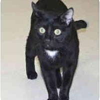 Adopt A Pet :: Teddy Bear - Milwaukee, WI