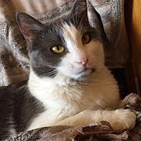 Adopt A Pet :: BUTTERCUP - Glendale, AZ