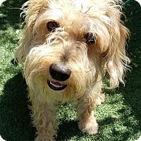 Adopt A Pet :: Herbie - Los Angeles, CA