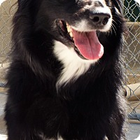 Adopt A Pet :: Marigold - Grants Pass, OR