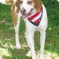 Adopt A Pet :: Leonides - Voorhees, NJ