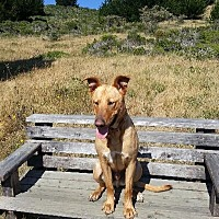 Adopt A Pet :: Jaxon - Half Moon Bay, CA