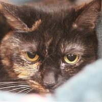 Adopt A Pet :: Girlfriend - North Branch, NJ
