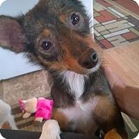 Terrier (Unknown Type, Small) Mix Dog for adoption in Media, Pennsylvania - Sara