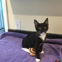 Adopt A Pet :: Faith - Randleman, NC