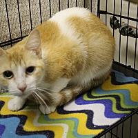 Adopt A Pet :: taquito - Muskegon, MI