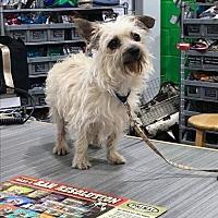 Adopt A Pet :: Toto - Nashville, TN
