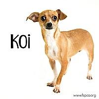 Adopt A Pet :: Koi - Troy, VA
