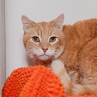 Adopt A Pet :: Jimmy - Mission Hills, CA