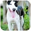 Photo 1 - Great Dane/Greyhound Mix Dog for adoption in Houston, Texas - Jester