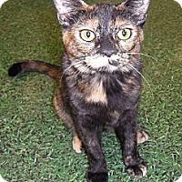 Adopt A Pet :: Cassie - Chandler, AZ