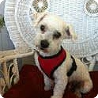 Adopt A Pet :: Sammy - Goleta, CA