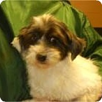 Adopt A Pet :: Henrietta ADOPTED!! - Antioch, IL