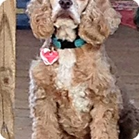 Adopt A Pet :: Mia - Sugarland, TX