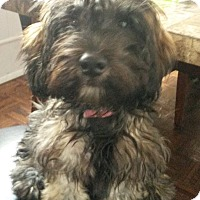 Adopt A Pet :: Minnie - Playa Del Rey, CA
