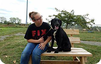 Labrador Retriever Mix Dog for adoption in Elyria, Ohio - Lady Godiva
