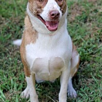 Adopt A Pet :: Cooper - Christiana, TN