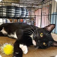 Adopt A Pet :: Evelyn - Trevose, PA